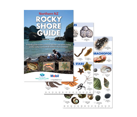 Marine Studeis Rocky Shore Guide Brochure